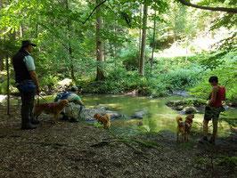 20.07.19 - Hike & Trail durchs Höllbachtal