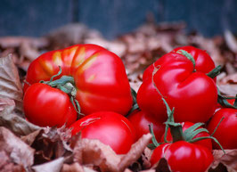 *NEU* 'Queen Of Hearts' Fleischtomate