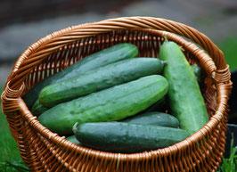 'Marketmore' Salatgurke