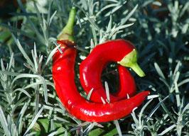 'Twister' Chili