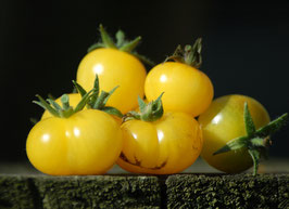 'Fablonelystyni' Kirschtomate