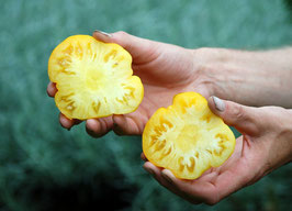 'Yellow Ruffled' Fleischtomate