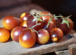 'Indigo Kumquat' Buschtomate