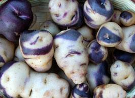 'Mecklenburger Schecke' Kartoffel
