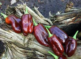 'Schokospitz' Paprika