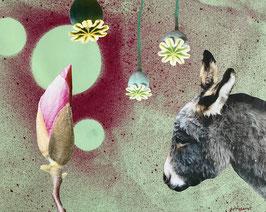 Magnolia Donkey Dream