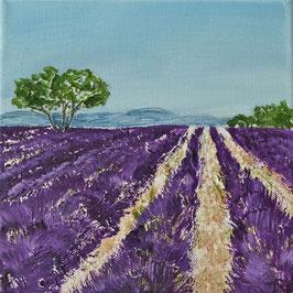 Lavendelfeld 20 x 20 x 1,5 Nr. 1