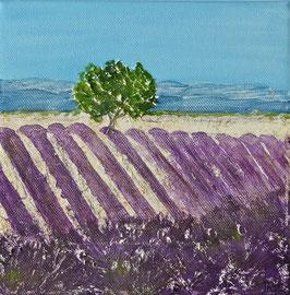 Lavendelfeld 20 x 20 x 1,5 Nr. 3