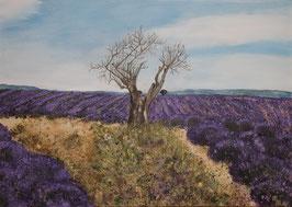 Lavendelfelder in der Provence  70 x 50 x 3,5 cm
