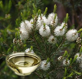 Cajeput Essential Oil(steam distilled)