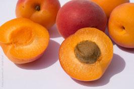 Apricot Kernel Oil, 16oz