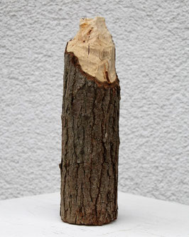 """Biberelfenbein """"Junger Baumstumpf"""""""