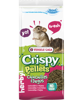 CRISPY CHINCHILLA / DEGU