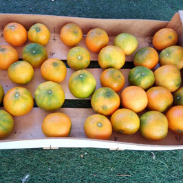 mandarina clemenrubí