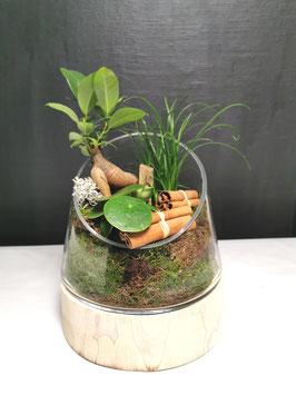 Terrarium verre et bois