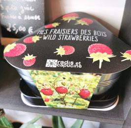 """""""Mes fraisiers des bois"""""""