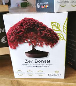 Kit zen bonsai