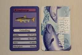 Fischquartett