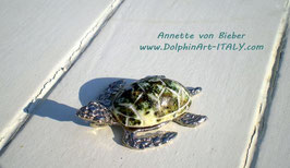 *SHELL TURTLE*