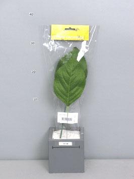 Hydrangea leaf green