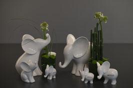 Elefant Leon