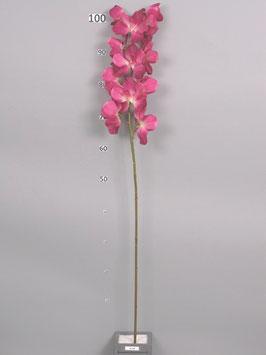 Orchidee Vanda Himba fuchsia