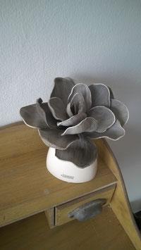 Delphinium Led Grey