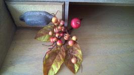Herbst Zweig