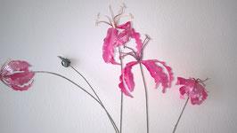Gloriosa pink frost
