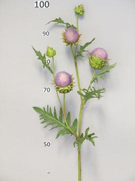 Distel lavender