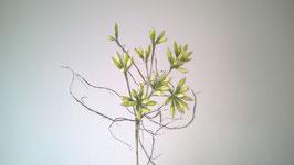 Exoticflora, grün