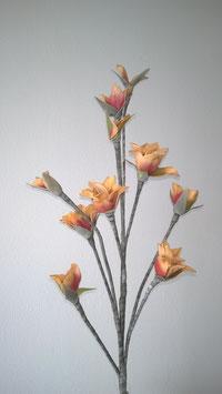 Schaumstoffblüte, orange