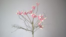 Exoticflora, rosa