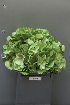 Hortensiekopf  grün 22 cm