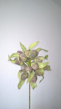 Schaumstoffblüte mit Früchten