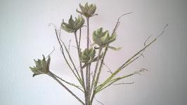 Magnolien Ast, grün