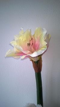 Amaryllis weiß pink