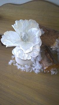 Magnolie weiß