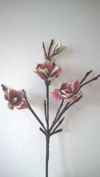 Magnolien Ast, altrosa-grün