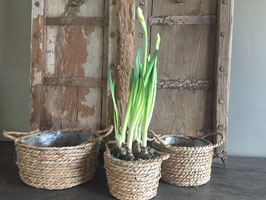 Set van drie planten manden