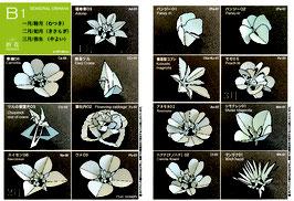 中級季節の花B1