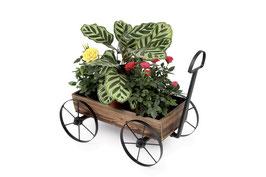 "Deko-Pflanzen ""Handwagen"", Geschenke-Dekoration"
