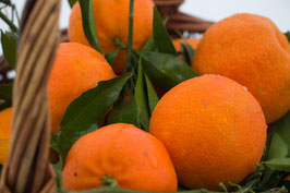 Frische Mandarinen aus Milis