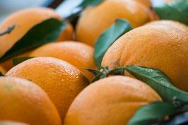 Frische Apfelsinen aus Milis