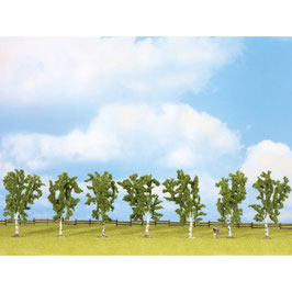 Berken Bomen 25096
