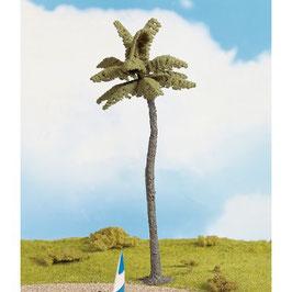Palm Boom 21981