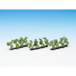 Plantage Bomen