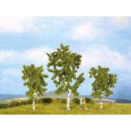 Berkenboom