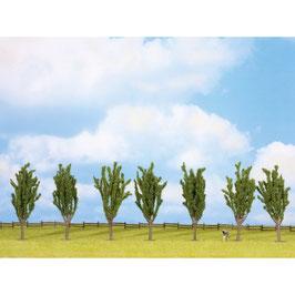 Populieren Bomen 25098