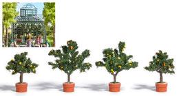 Busch 6619 Vier citrusbomen in plantenbakken HO
